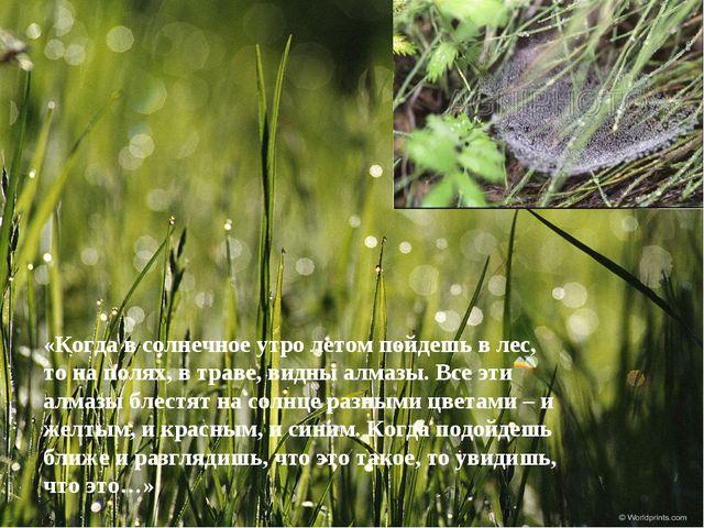 «Когда в солнечное утро летом пойдешь в лес, то на полях, в траве, видны алма...