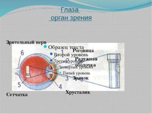 Уши орган слуха и равновесия Ушная раковина Слуховой проход Барабанная перепо
