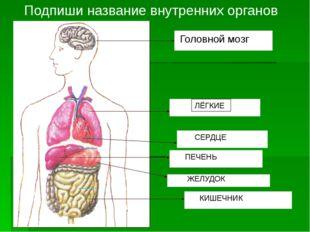 Системы органов человека Опорно-двигательная 10 20 30 Кровеносная 10 20 30 Не