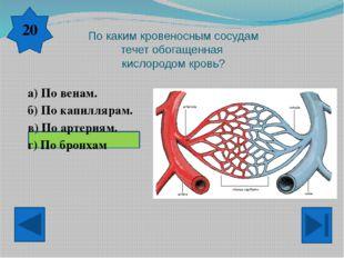К нервной системе относятся… а) головной, спинной мозг, нервы. б) сердце, ве