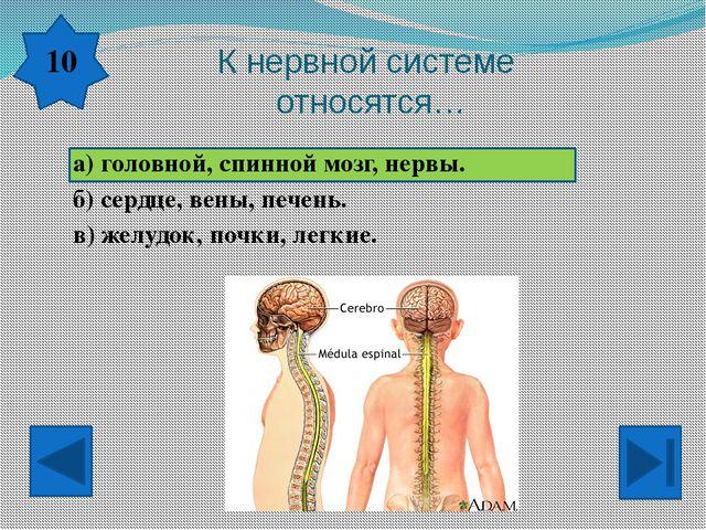 Кто контролирует работу твоего тела? а) Ты сам. б) Головной и спинной мозг....