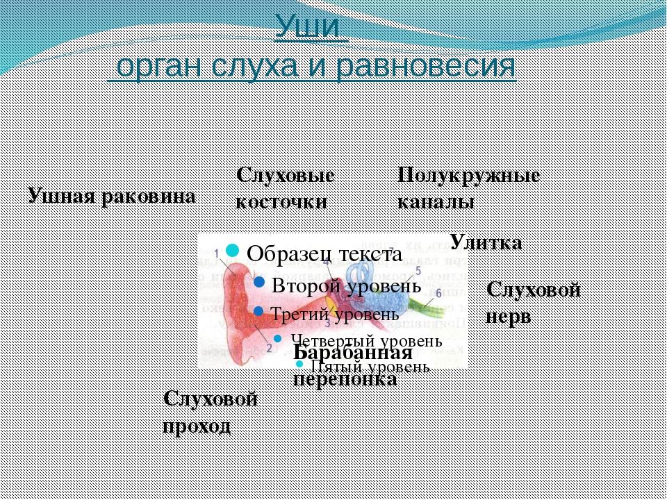 Язык орган вкуса