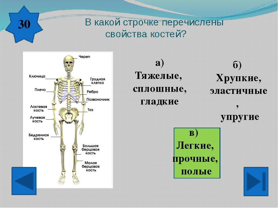 По каким кровеносным сосудам течет обогащенная кислородом кровь? а) По венам...