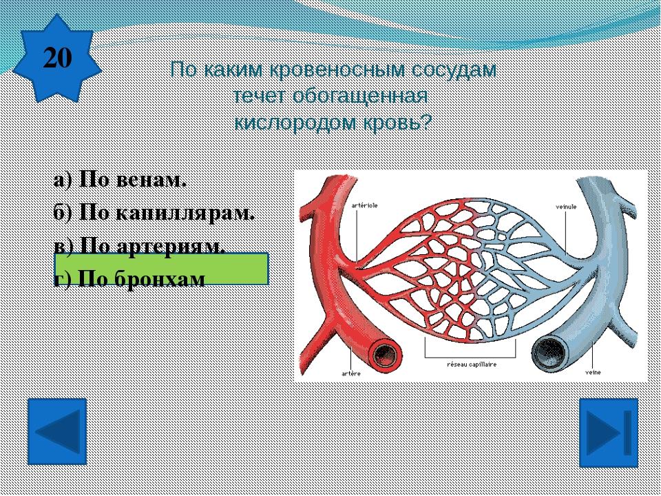 К нервной системе относятся… а) головной, спинной мозг, нервы. б) сердце, ве...