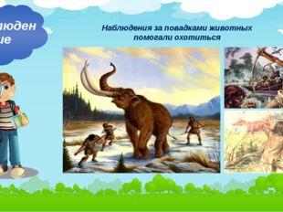 Наблюдения за повадками животных помогали охотиться Наблюдение