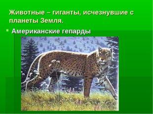 Животные – гиганты, исчезнувшие с планеты Земля. Американские гепарды