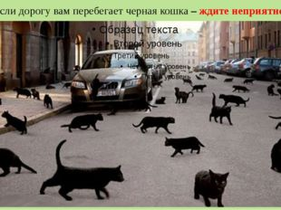 Если дорогу вам перебегает черная кошка – ждите неприятностей.
