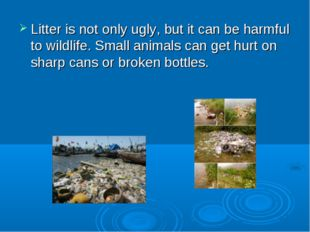Litter is not only ugly, but it can be harmful to wildlife. Small animals can