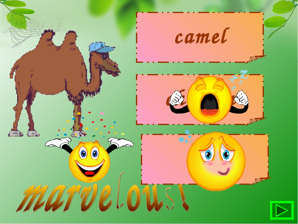 camel chicken cow