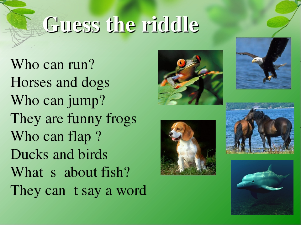 Guess the riddle Who can run? Horses and dogs Who can jump? They are funny fr...