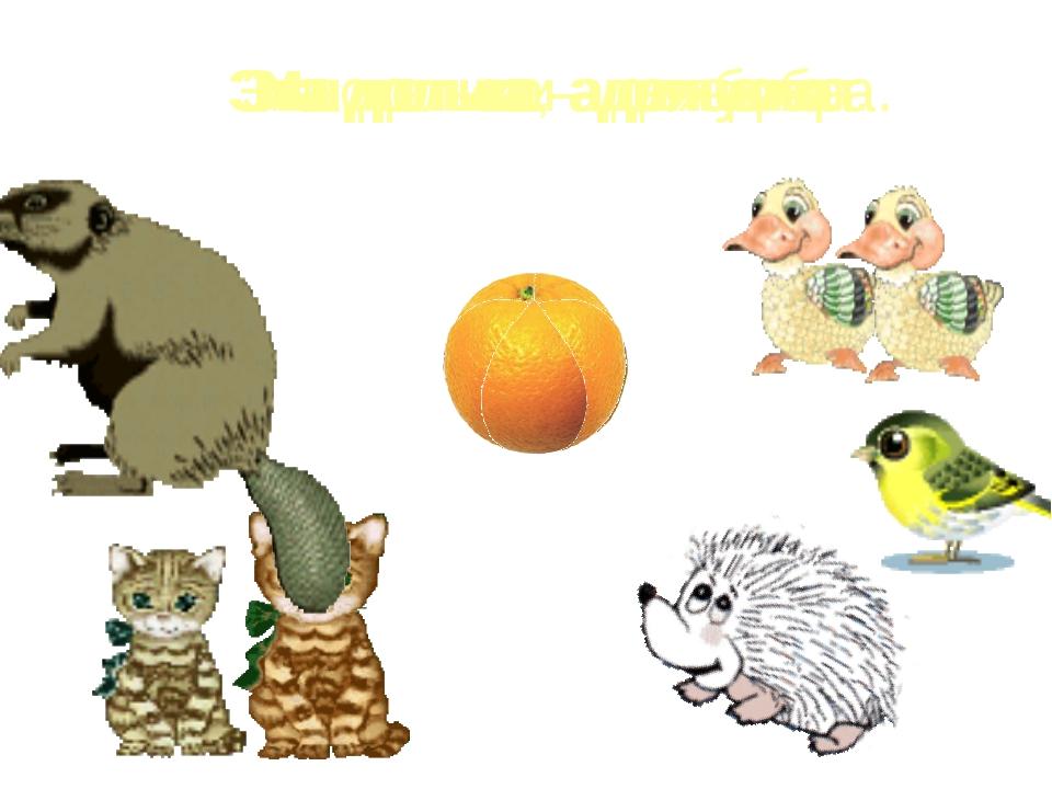Мы делили апельсин. Много нас, а он один. Эта долька – для ежа. Эта долька –...