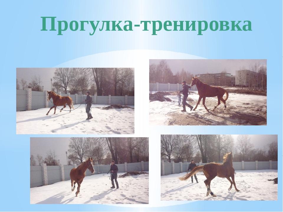 Прогулка-тренировка