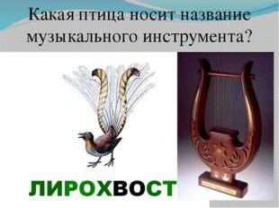 Какая птица носит название музыкального инструмента?
