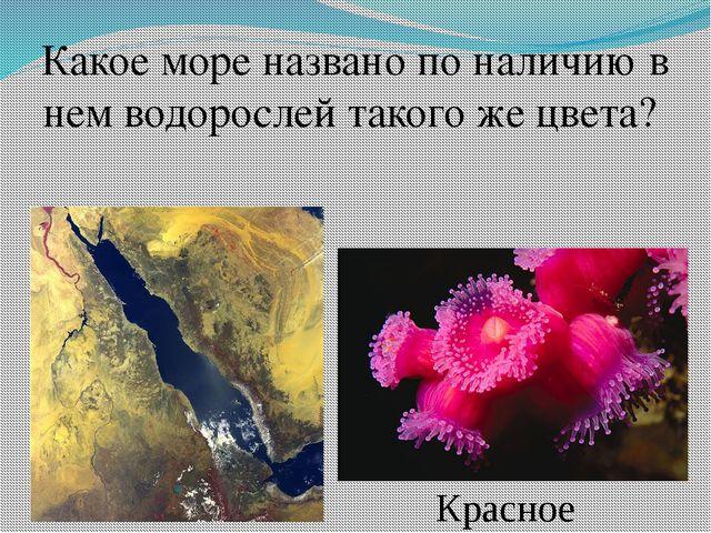 Какое море названо по наличию в нем водорослей такого же цвета? Красное
