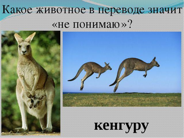 Какое животное в переводе значит «не понимаю»? кенгуру
