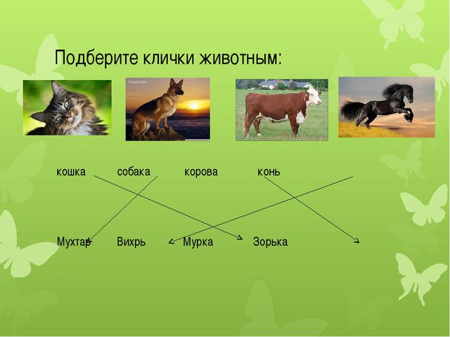 Подберите клички животным: кошка собака корова конь Мухтар Вихрь Мурка Зорька