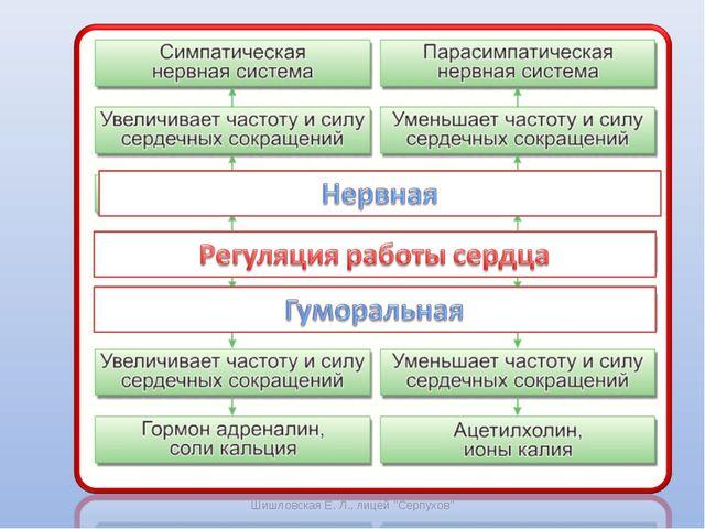 """Шишловская Е. Л., лицей """"Серпухов"""" Шишловская Е. Л., лицей """"Серпухов"""""""
