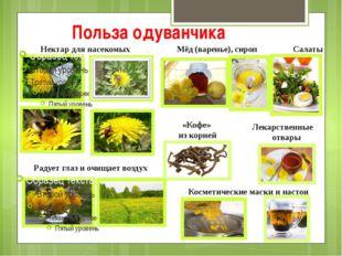 Польза одуванчика Нектар для насекомых Мёд (варенье), сироп Салаты Лекарствен