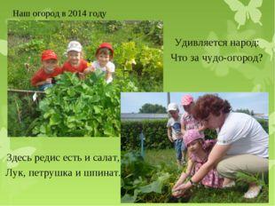 Наш огород в 2014 году Здесь редис есть и салат, Лук, петрушка и шпинат. Удив