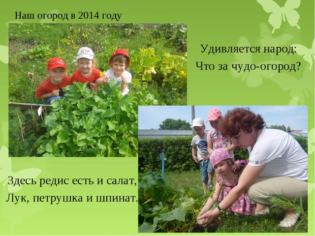 Наш огород в 2014 году Здесь редис есть и салат, Лук, петрушка и шпинат. Удив...