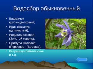 Водосбор обыкновенный Башмачек крупноцветковый; Ирис (Касатик щетинистый); Ро