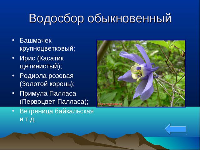 Водосбор обыкновенный Башмачек крупноцветковый; Ирис (Касатик щетинистый); Ро...