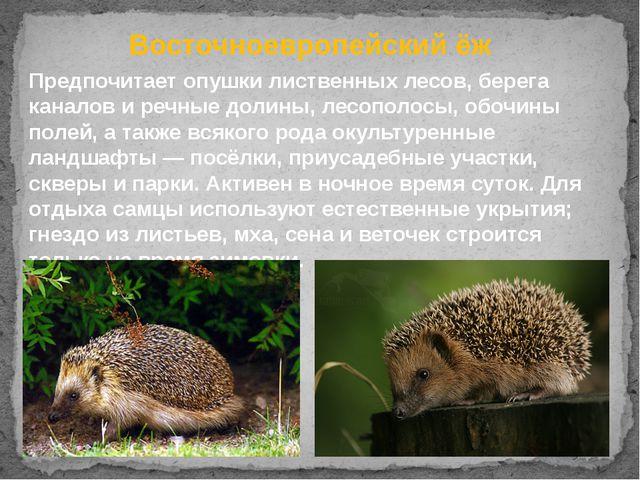Восточноевропейский ёж Предпочитает опушки лиственных лесов, берега каналов и...