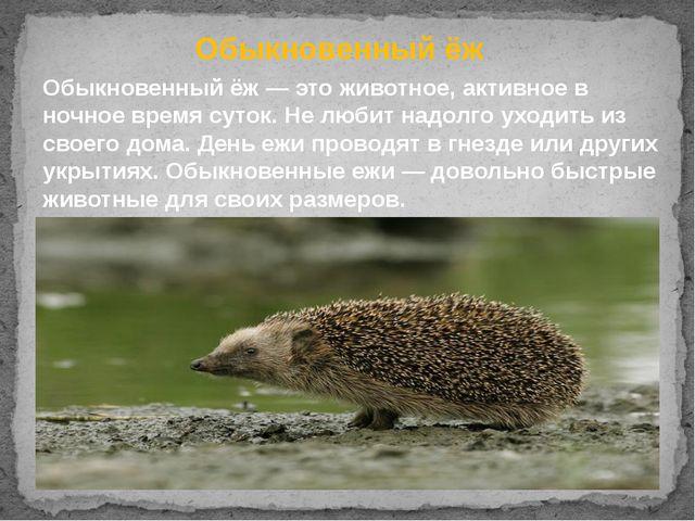 Обыкновенный ёж Обыкновенный ёж— это животное,активное в ночное время суток...
