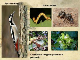 Дятлы питаются: Насекомыми: Семенами и плодами различных растений