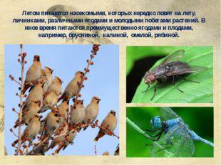 Летом питаются насекомыми, которых нередко ловят на лету, личинками, различны