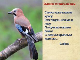Синих крылышков красу Разглядеть нельзя в лесу, По сучкам порхает бойко С