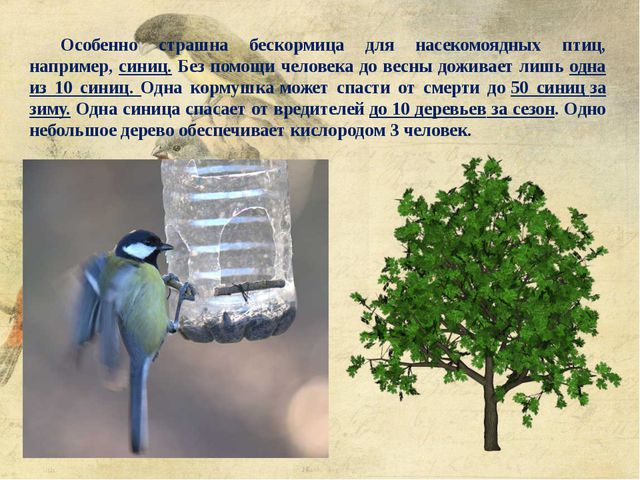 Особенно страшна бескормица для насекомоядных птиц, например, синиц. Без помо...