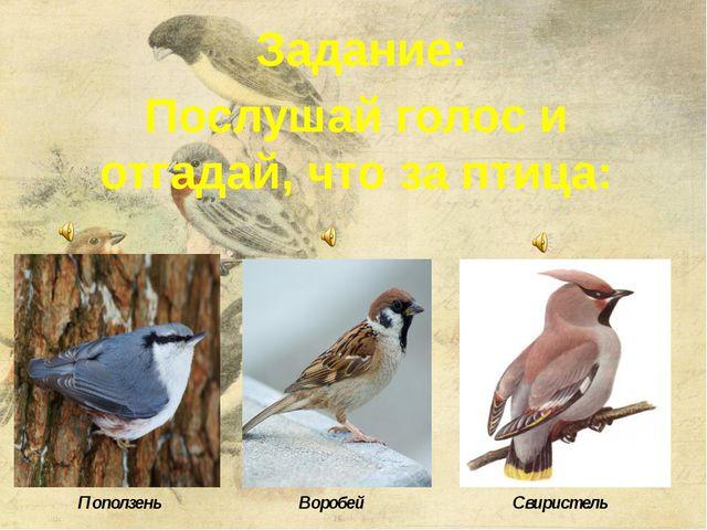 Задание: Послушай голос и отгадай, что за птица: Поползень Воробей Свиристель