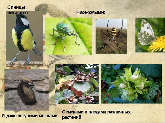 Синицы питаются И даже летучими мышами Семенами и плодами различных растений...
