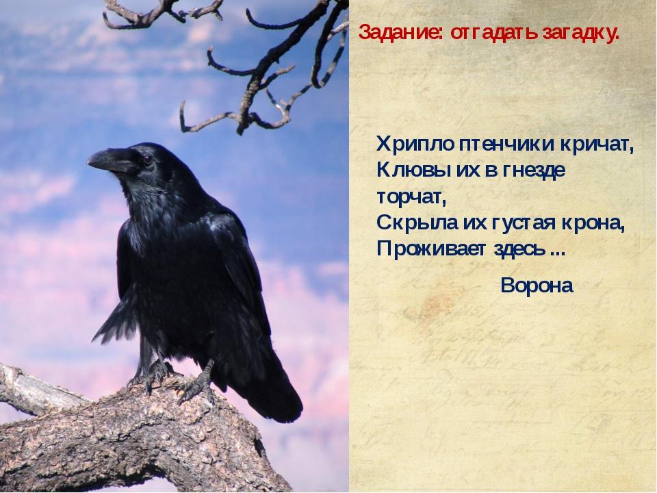 Хрипло птенчики кричат, Клювы их в гнезде торчат, Скрыла их густая крона,...