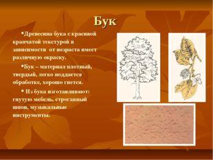 Бук Древесина бука с красивой крапчатой текстурой в зависимости от возраста и