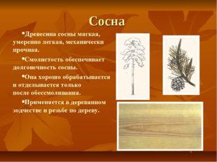 Сосна Древесина сосны мягкая, умеренно легкая, механически прочная. Смолистос