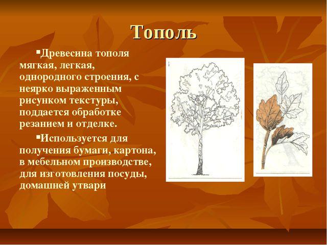Тополь Древесина тополя мягкая, легкая, однородного строения, с неярко выраже...