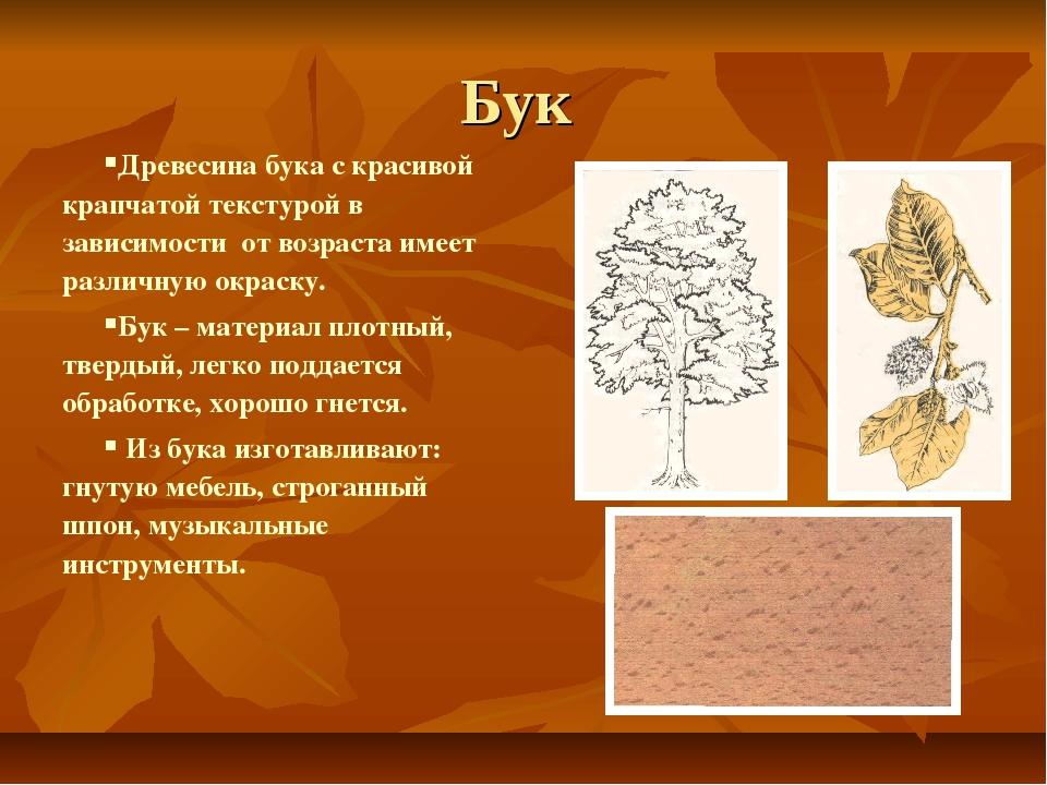 Бук Древесина бука с красивой крапчатой текстурой в зависимости от возраста и...