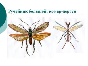Ручейник большой; комар-дергун