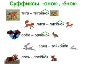 Суффиксы -онок-, -ёнок- тигр – тигрёнок лиса – лисёнок орёл – орлёнок заяц –