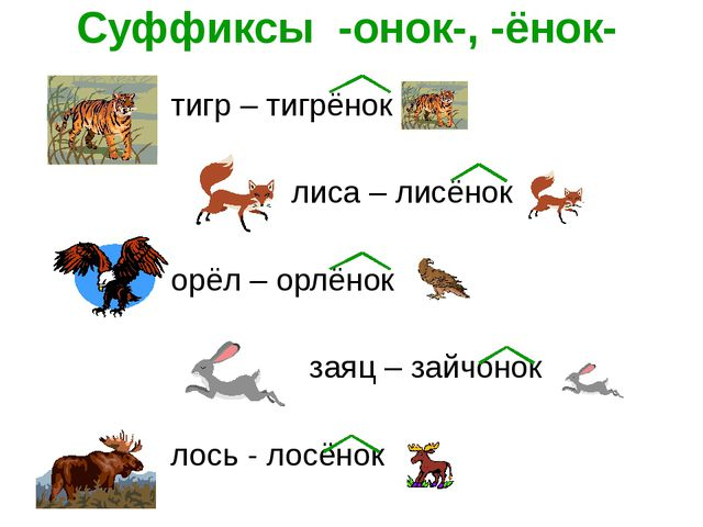 Суффиксы -онок-, -ёнок- тигр – тигрёнок лиса – лисёнок орёл – орлёнок заяц –...