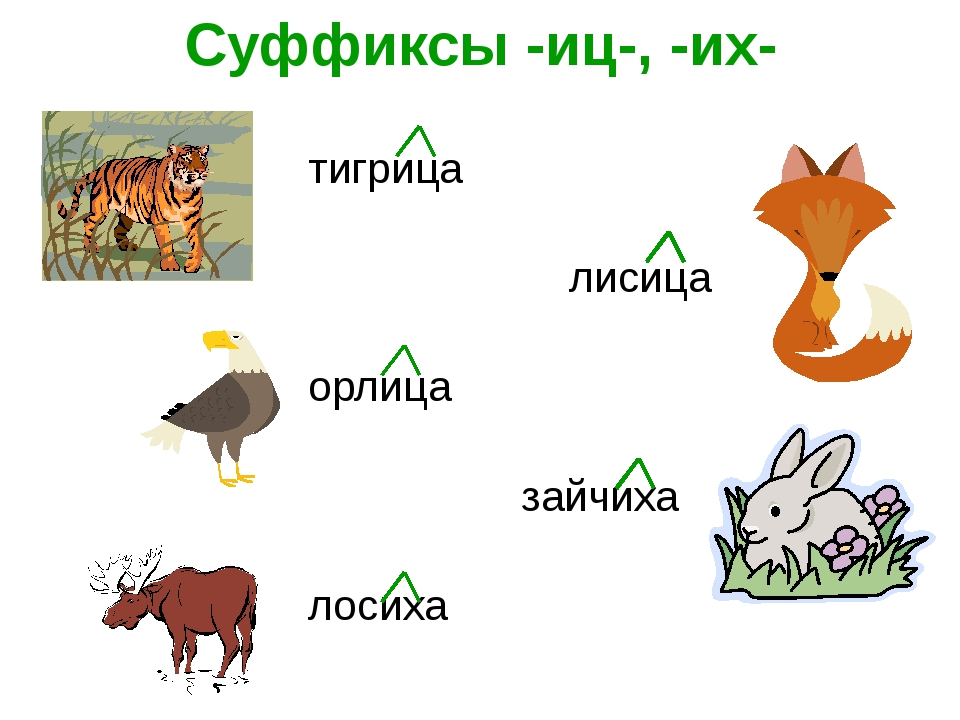 Суффиксы -иц-, -их- тигрица лисица орлица зайчиха лосиха