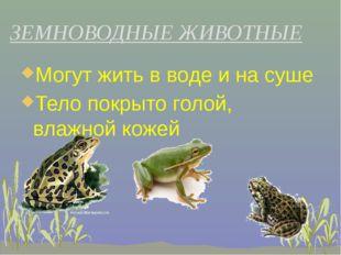 Могут жить в воде и на суше Могут жить в воде и на суше Тело покрыто голой,