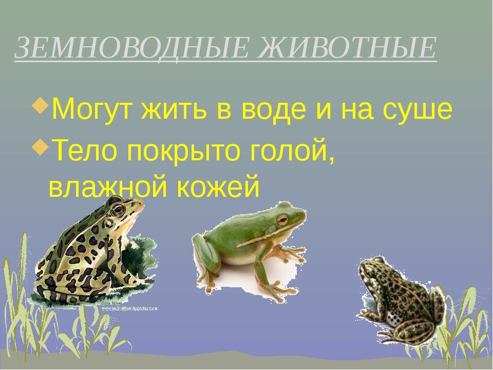 Могут жить в воде и на суше Могут жить в воде и на суше Тело покрыто голой,...