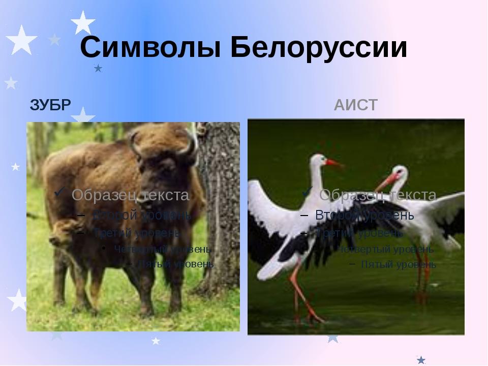 Символы Белоруссии ЗУБР АИСТ