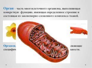 Орган – часть многоклеточного организма, выполняющая конкретную функцию, имею