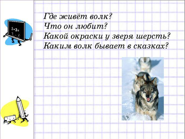 Где живёт волк? Что он любит? Какой окраски у зверя шерсть? Каким волк бывает...