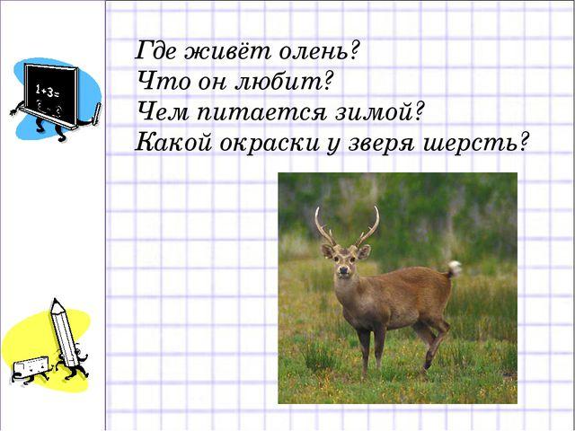 Где живёт олень? Что он любит? Чем питается зимой? Какой окраски у зверя шерс...
