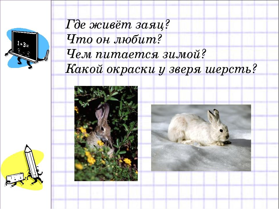 Где живёт заяц? Что он любит? Чем питается зимой? Какой окраски у зверя шерсть?